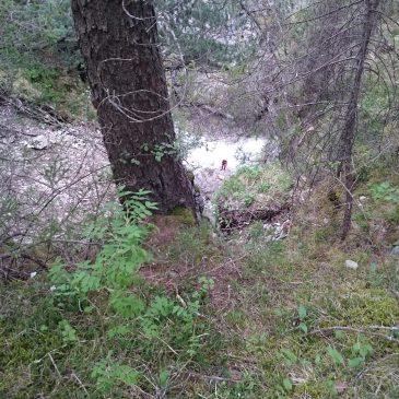 Hachleschlucht – Canyoning Schluchtenführer