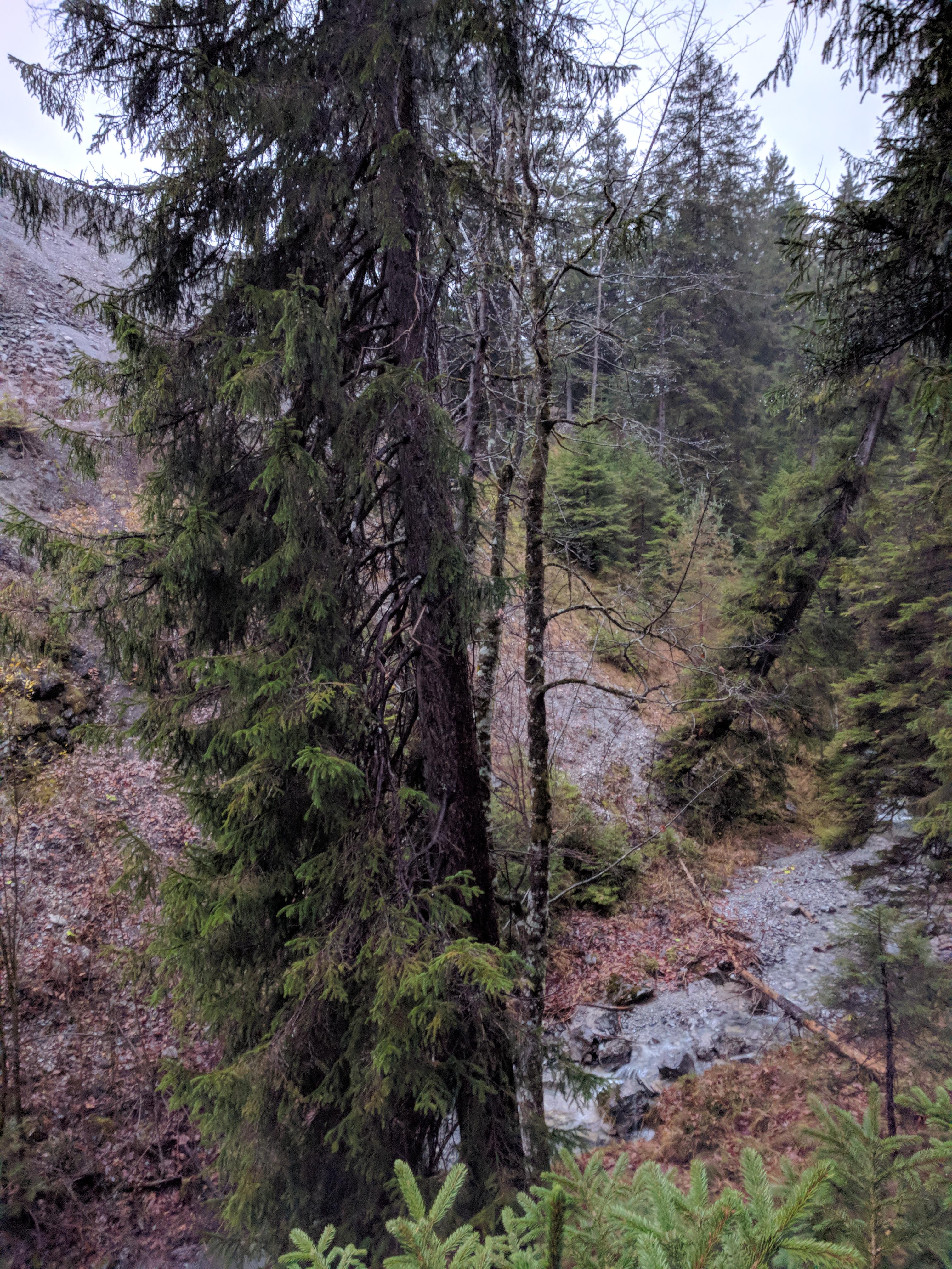 Canyoning Lochbach Ausstieg beim Steinbruch